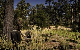 A cowboy resting in RDR2